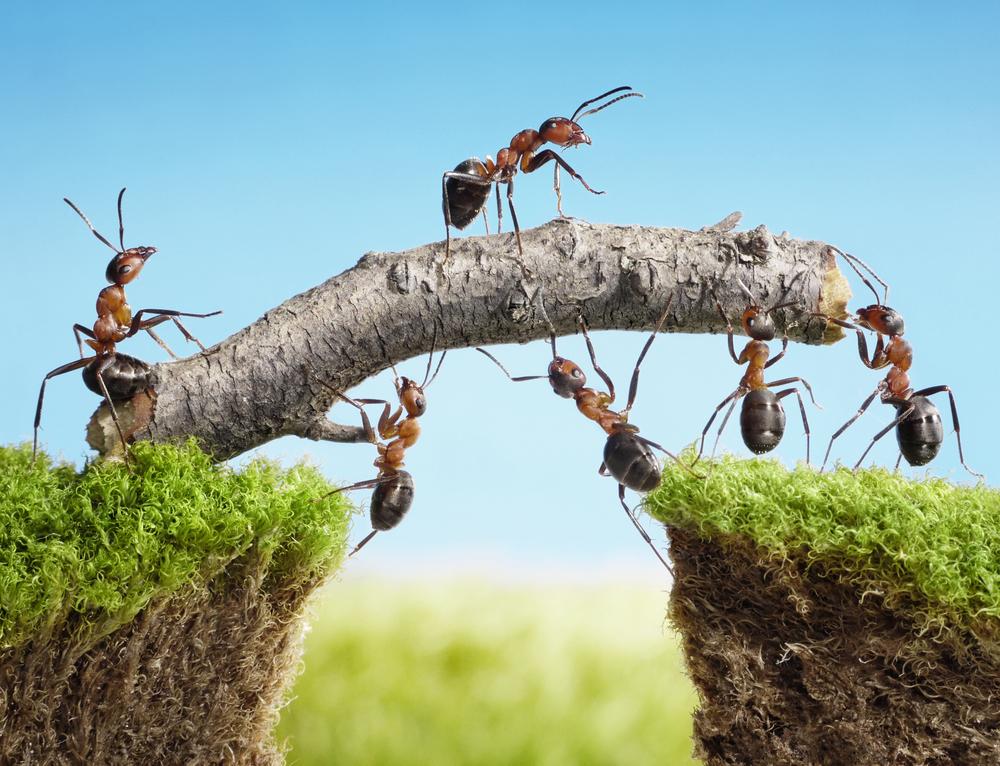 Organiser un team building clé en main d'equipe original