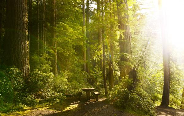 Lieux événementiel forêt